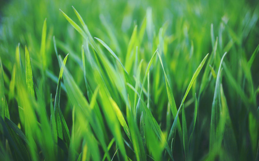 Le déjeuner sur l'herbe, moral et art