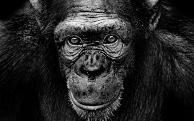 Les créations d'animaux et de robots sont-elles protégeables ?